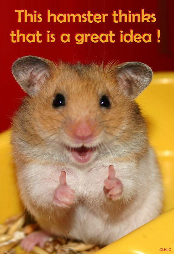 This hamster thinks this is a great idea!