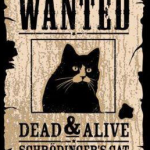 Wanted: Schroedingers Cat